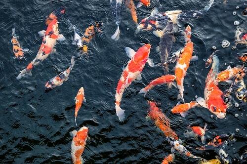 Focus Fish Farm