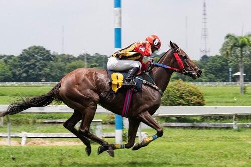 Horse Sports Coaching