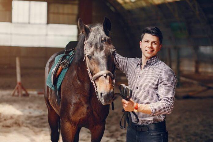 Profitable Horse Business Ideas